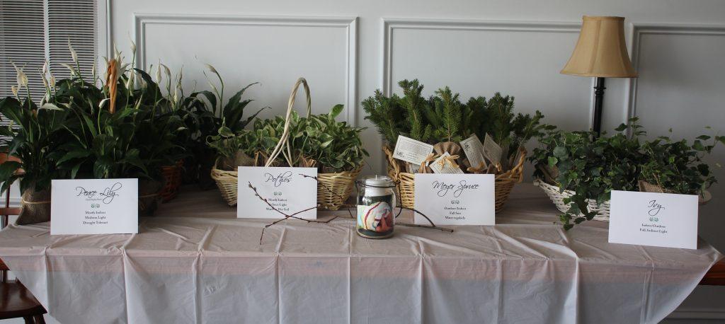 forestplants